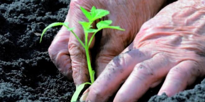 Los retos de la gestión del agua en la agricultura